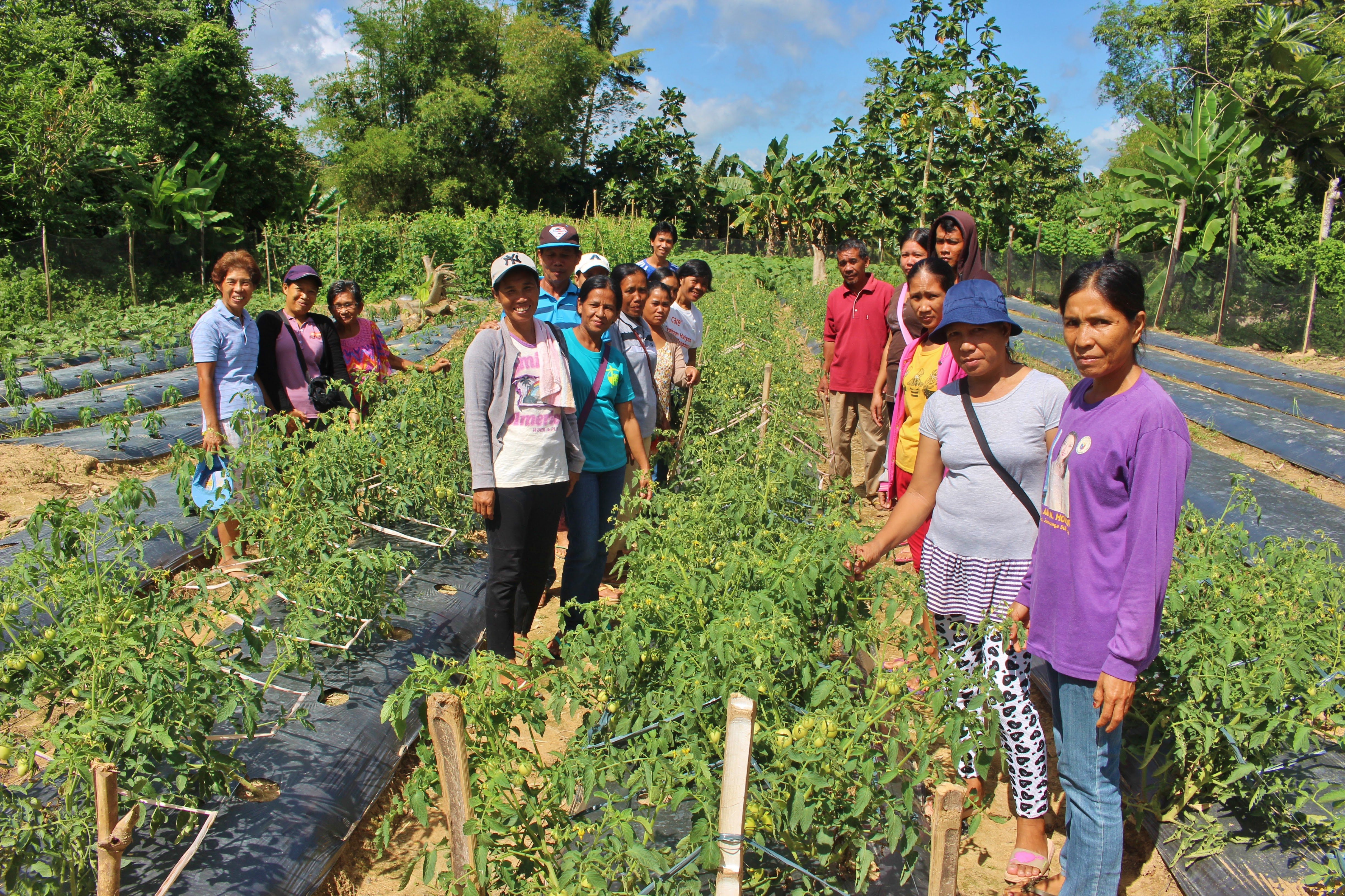 Farmers in Iloilo establish vegetable demo farms for learning and income generation